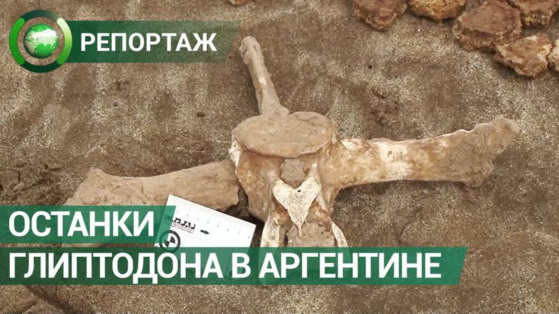 Останки древнего родственника броненосца нашли на пляже в Аргентине ФАН ТВ