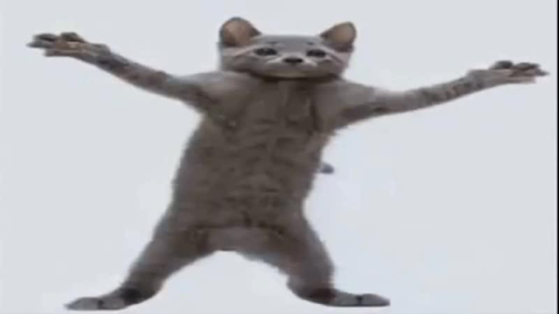 Кот флексит под Rami Murrey - Ты мой ангел на протяжении 3 минут