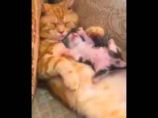 мама спит, она устала
