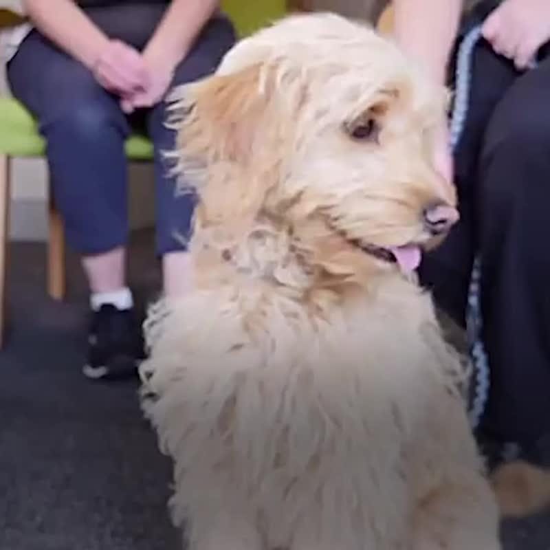 Собака-терапевт