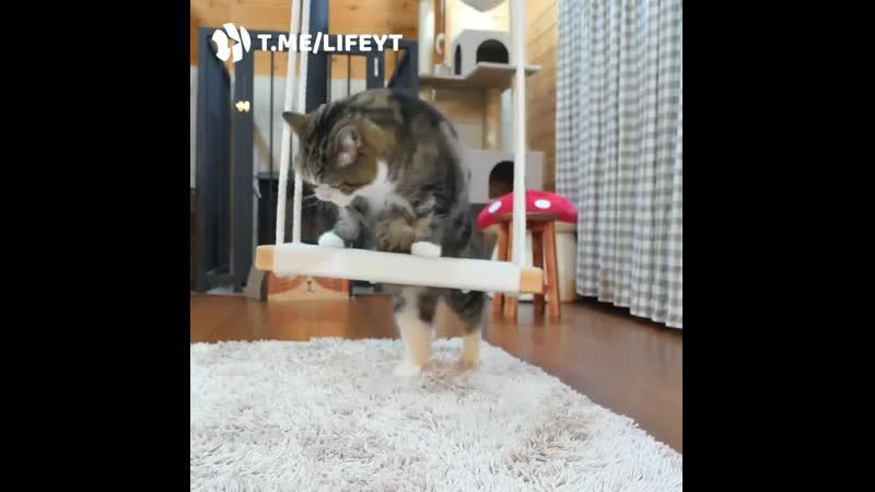 Кот залезает на качель