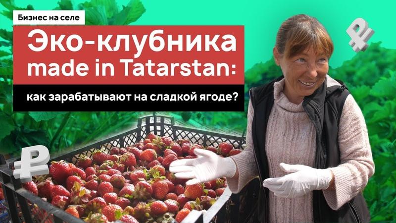 Эко клубника made in Tatarstan как зарабатывают на сладкой ягоде