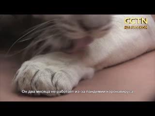 Сотни животных голодают в зоопарке Киева