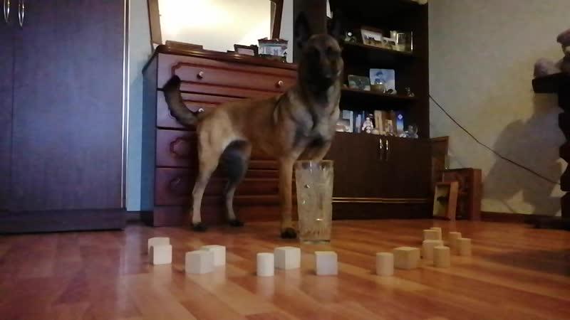 Собираем кубики в вазу