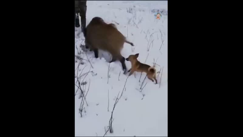 От вида этой охотничьей компании все зайцы в лесу со смеху помрут