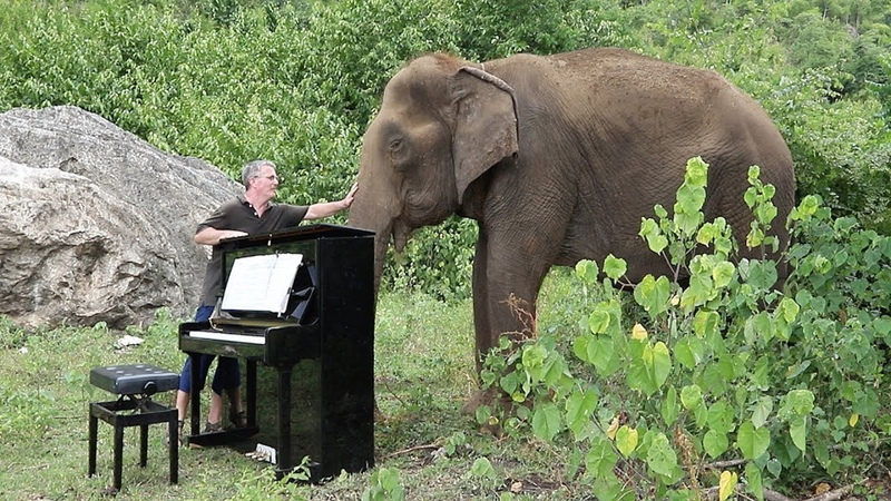 Debussy Clair de Lune on Piano for 80 Year Old Elephant