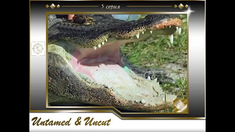 Дикие и опасные 5 серия Опасные игры с аллигаторами Untamed and Uncut 5 episode 14 07 2012