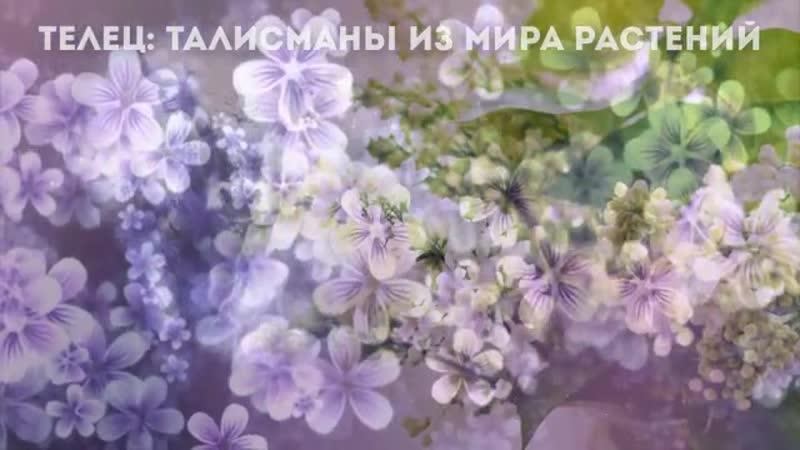Телец талисманы из мира растений