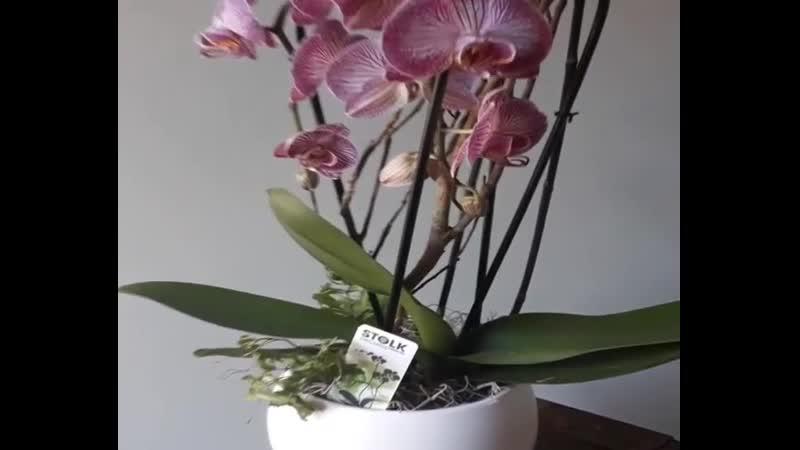 Неделя Орхидей продолжается Вы знаете что у нас есть сопутствующие товары для орхидей Удобрения грунт и специальные прозрач