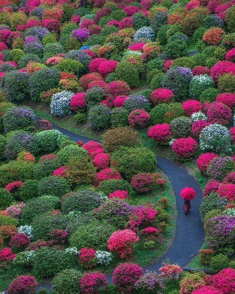 Сад в Оме, Япония