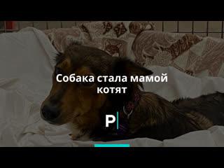 Собака стала мамой котят