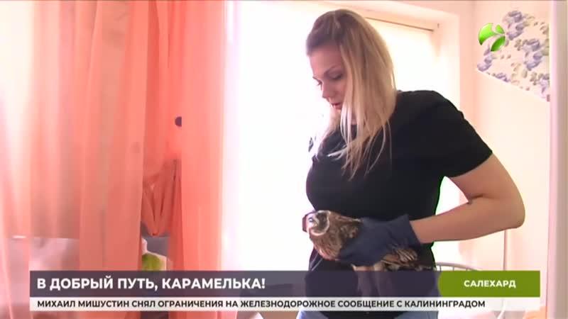 На Ямале журналистка спасла и выходила контуженого совенка Журналисткавыпустилана волю сову которую нашлаконтуженной в тунд