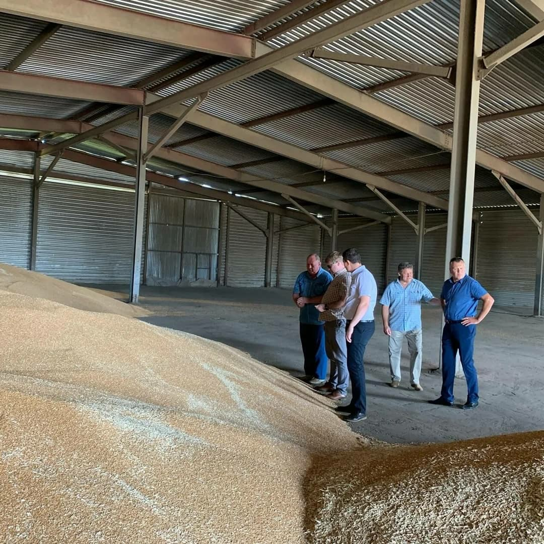 В Петровском районе идёт уборка озимой пшеницы