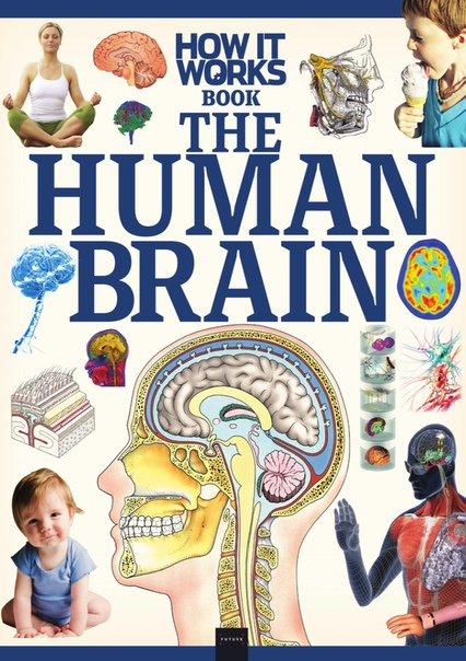How It Works The Human Brain - 1st Edition  2020 UserUpload.Net