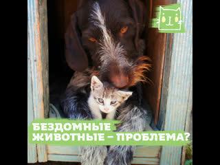 Как помогают бездомным животным в разных странах