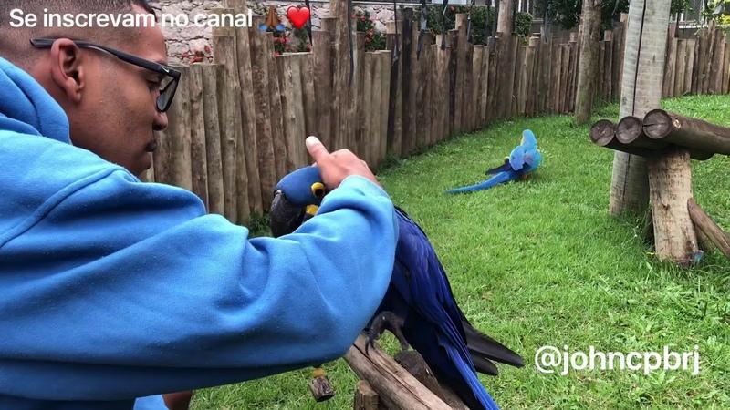 QUARENTENA- CRIADOURO PEDRA BRANCA! AVES PETS PAPAGAIOARARA-CANINDÉARARA-AZULpapagaio parrot