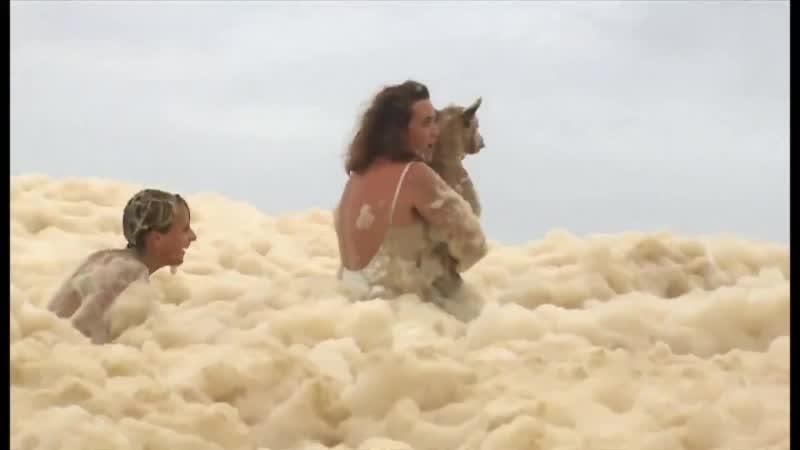 Миром правит ЛЮБОВЬ СПАСЕНИЕ СОБАКИ из морской пены во время шторма Байрон Бей Австралия 15 12 20