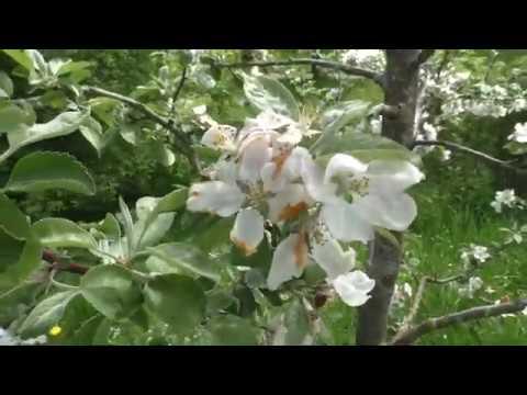 Как поживает яблоневая аллея? Где работает наш ведущий?