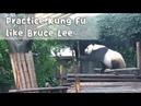 Practice Makes A Kung Fu Panda   iPanda