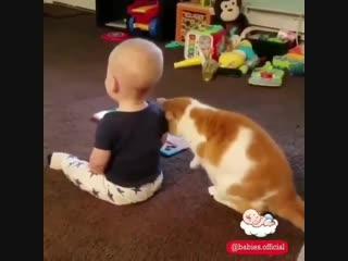 Малыши и котики