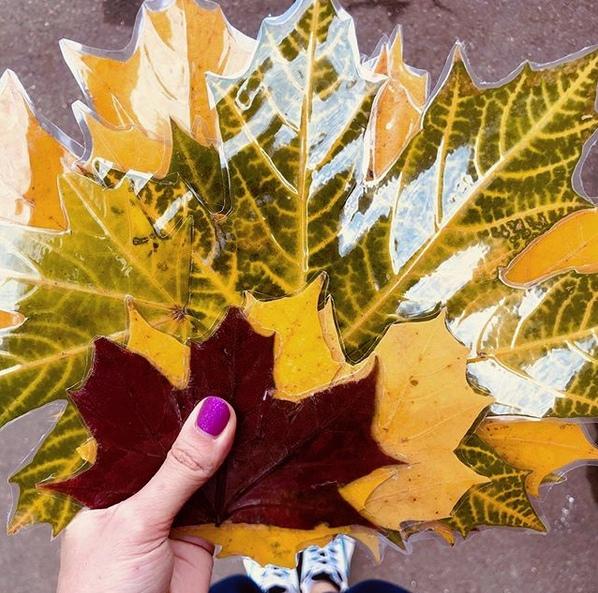 ОСЕННИЕ ЛИСТЬЯ Собираем самые красивые Можно даже после дождя. Хорошенько проглаживаем утюгом через бумагуВысушенные листья ламинируем и вырезаем, чуть закруглив краяДелов на 10 минут, а как