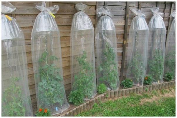 Удобно для вьющихся растений - и тепло и влага.