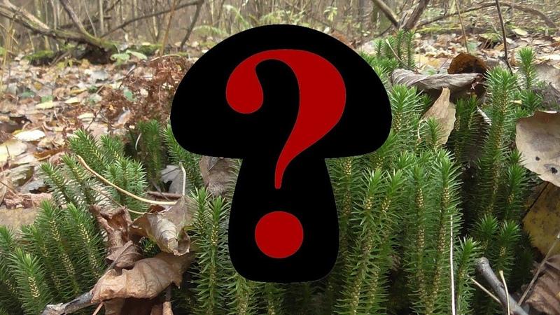 Догадайтесь какой гриб собираем в октябре в центральной части России