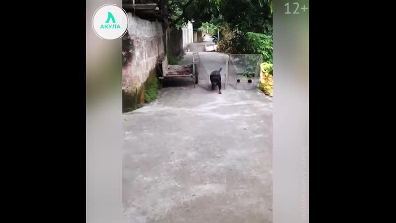 Собака спасает своего хозяина | АКУЛА
