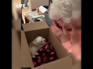 Бабушка и лучшии сюрприз