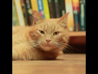 Первого кота-инфлюенсера официально оформили в России