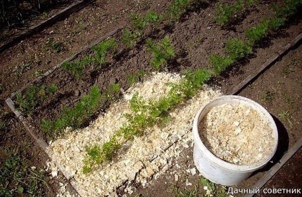 Если вы будете каждый год вносить в почву опилки, то земля станет легкой, рыхлой и мягкой