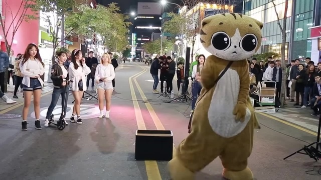JHKTV] 신촌명물고양이댄스 sin chon special cat k pop dance dance
