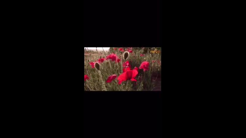 Video c1e2b13ef0baef10a8771522bc45462a