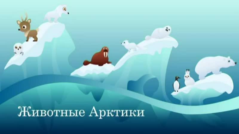 Дистанционное занятие Животные Арктики