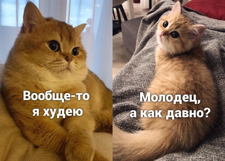 Худею