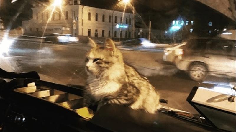 Замерзшая кошка запрыгнула в маршрутку Только посмотрите как поступил водитель
