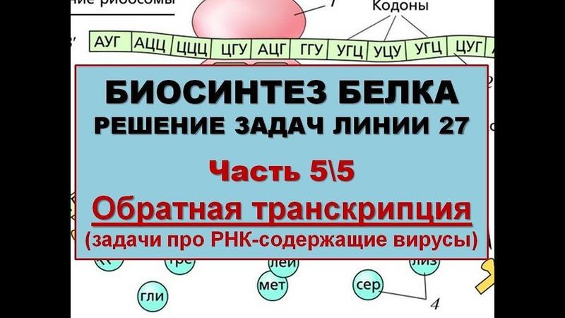 БИОСИНТЕЗ БЕЛКА. РЕШЕНИЕ ЗАДАЧ (5\5 Обратная транскрипция)