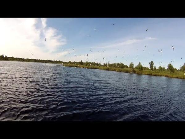 1А14. Рыбалка 2020. Чайкин остров.