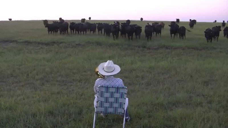 Serenading the cattle with my trombone Lorde Royals