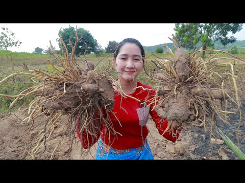 Find Taro From Hard Soil For Dessert Sros Yummy Cooking Vlogs