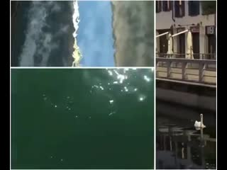 Dolphines are back in Venice! the upside of this pandemic... is the world getting a break of the virus HU-MAN 00