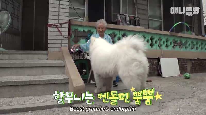 90살 나이차를 극복한 사모예드와 할머니 ㅣ Samoyed Dog And Grannie Overcome A 90 Year Age Gap