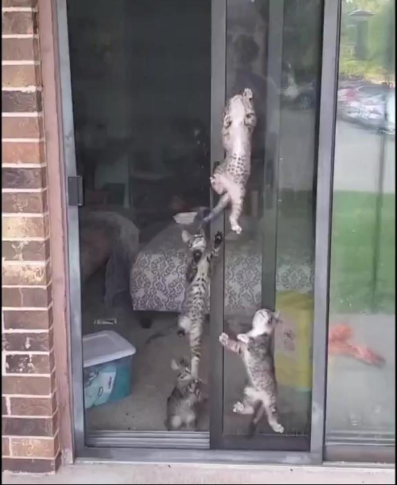 У кого-то тараканы, а кого-то котята 😂