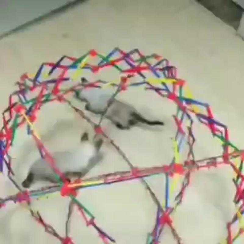 котята играются с шаром