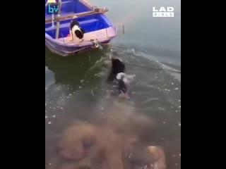Собаки, они такие!