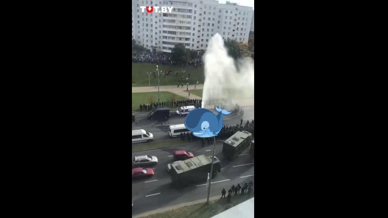 Минск настолько очистился, что на улицы города вернулись киты