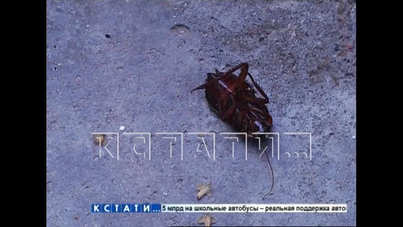 Тараканы расплодившиеся от добра одних жителей портят жизнь другим