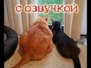 Приколы с котами и смешная ОЗВУЧКА – РЖАКА ДО СЛЁЗ – ЗАСМЕЯЛСЯ ПРОИГРАЛ вместе с PSO