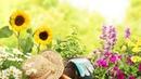 15 лайфхаков для садоводов. Пусть твоему участку завидуют все соседи.
