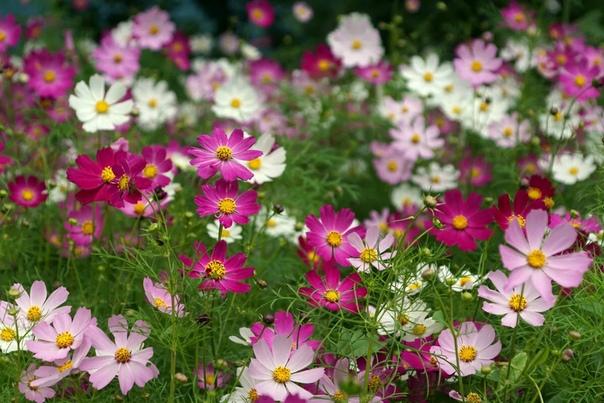 Как собирать семена если семена развиваются в соцветии корзинка